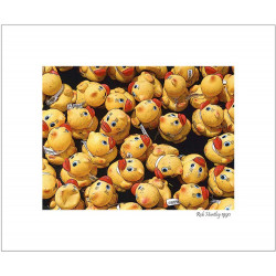 Rubber Duckies, Annual Race - 8x10 Matted Print