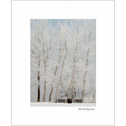Benches and Hoarfrost Trees - 8x10 Matted Print