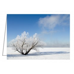 Hoar Frost Tree by the...