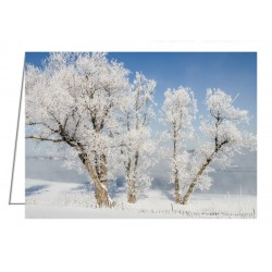 Hoar Frost on Trees -...