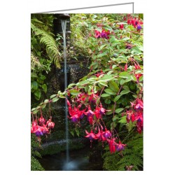 Fuchsia at a Well -...