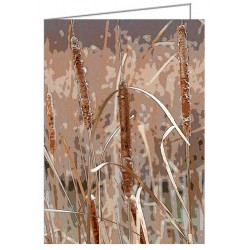 Cattails in the Fall -...