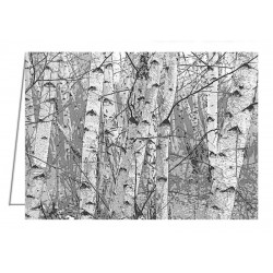 Birch Forest - Greeting Card