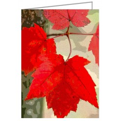 Maple Leaf Display -...