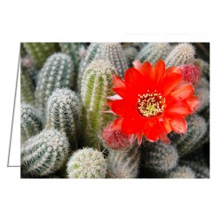 Cactus with orange flower -...