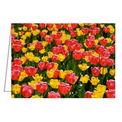 Pink and Yellow Tulips -...