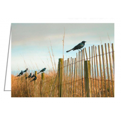 Grackles on a Fence - 2 -...