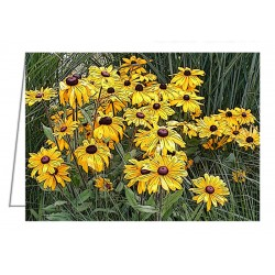 Black-Eyed Susans in the...