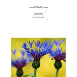 Bachelor's Buttons - Greeting Card
