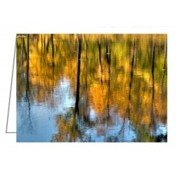 Beaver Pond Reflections - 2...