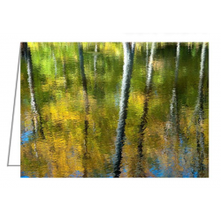 Beaver Pond Reflections - 3...