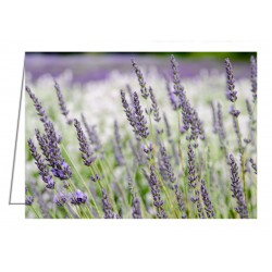 Lavender 2 - Greeting Card