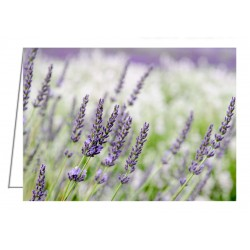 Lavender 3 - Greeting Card