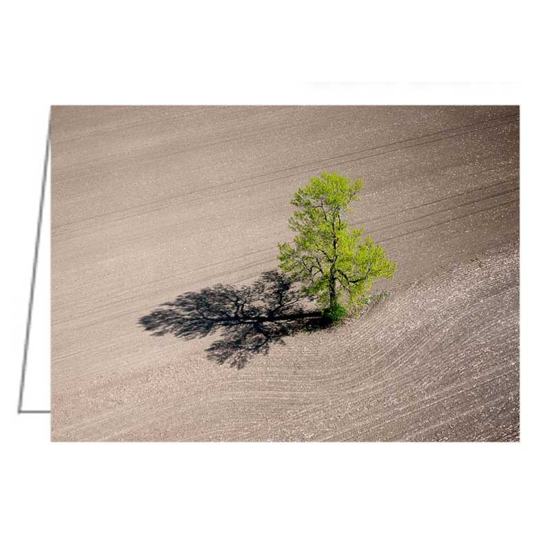 A lone tree in a newly seeded corn field - Greeting Card.