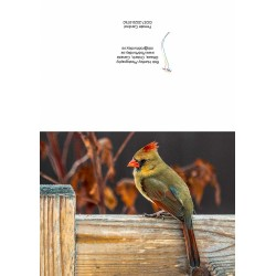 A photo greeting card. Female cardinal on a deck railing.