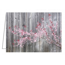 Purple Sandcherry in bloom - Greeting Card.