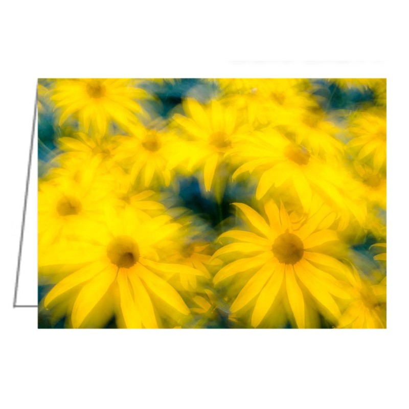 Glowing Blossoms, Black-eyed Susans - Greeting Card