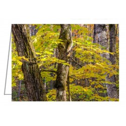 Autumn in a Quebec forest - Greeting Card