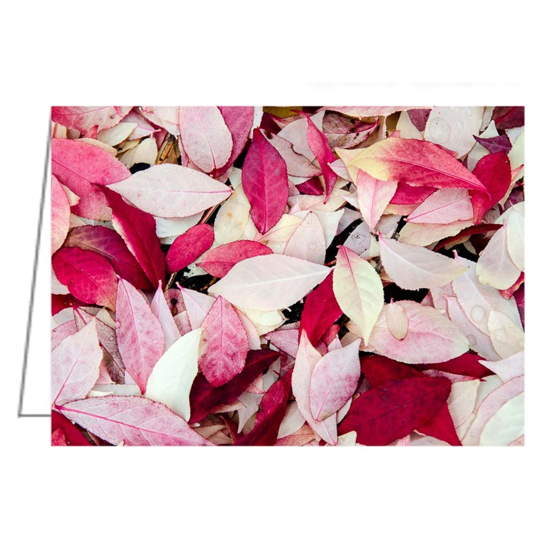 After the fire. Burning bush leaves - Greeting Card