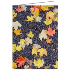 Fallen leaves on wet pavement - Greeting Card