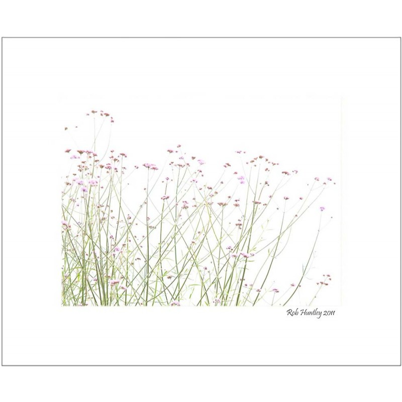 A Touch of Mauve - 8x10 Matted Print