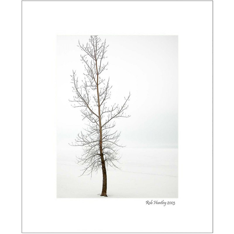 A lone tree in a newly seeded corn field - 8x10 Matted Print