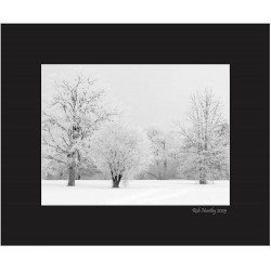 Hoarfrost Morning - 8x10 Matted Print
