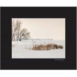 Cattails by the Shore in Winter - 8x10 Matted Print