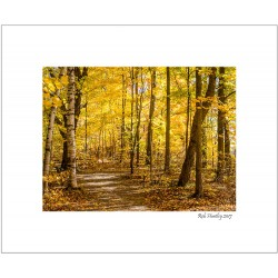 Woodland Trail at Mer Bleue - 8x10 Matted Print