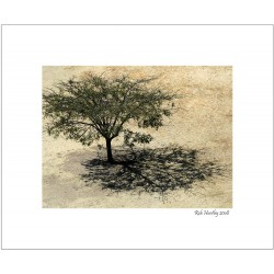 Tree and Shadow at Monte Alban - 8x10 Matted Print