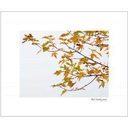 Autumn Tree Branch - 8x10 Matted Print